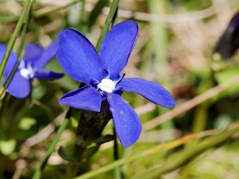 Flore et insectes de Vanoise 229811LacduPysColdelIseran002DxO800x600