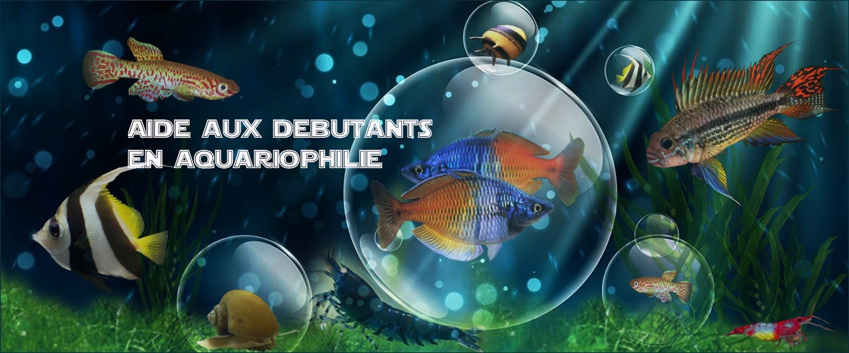 Aide aux débutants en aquariophilie.