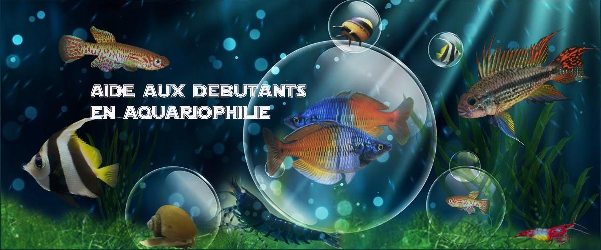 Aide aux débutants en aquariophilie.