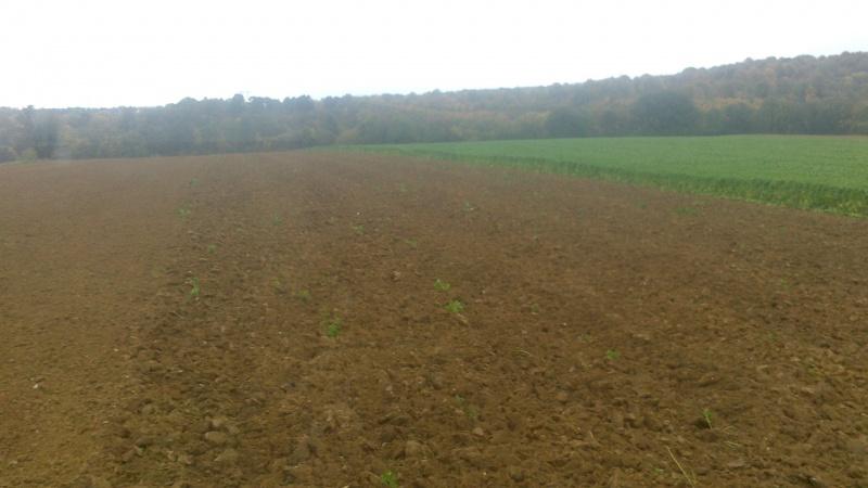 Debut des semis de blé - Page 7 231361paj131