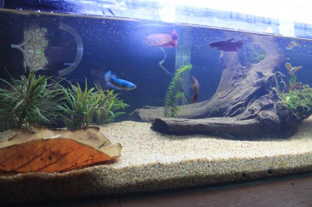 aquarium  100l pour mes femelles 232058ebay017