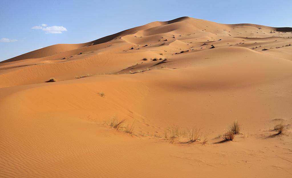 Mes ballades dans le désert de l'Erg Chebbi. 233289DSC2619