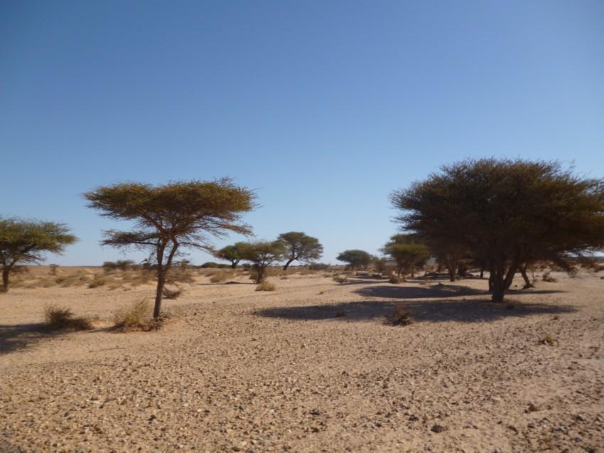 Le Grand Sud du Maroc - II 233452085