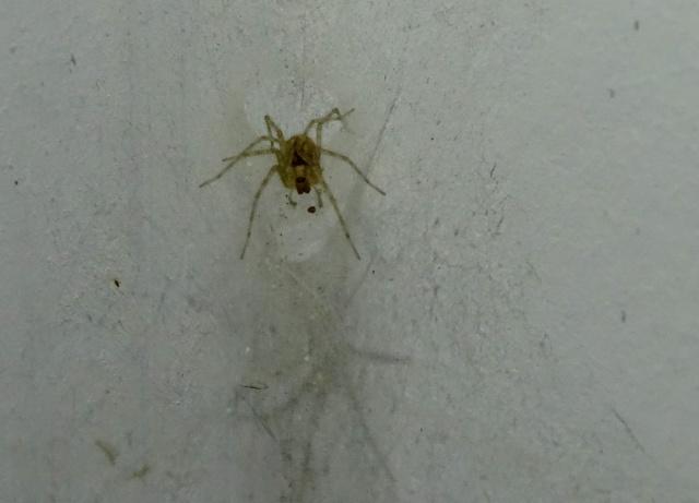 La maison des araignées 234429DSC02583