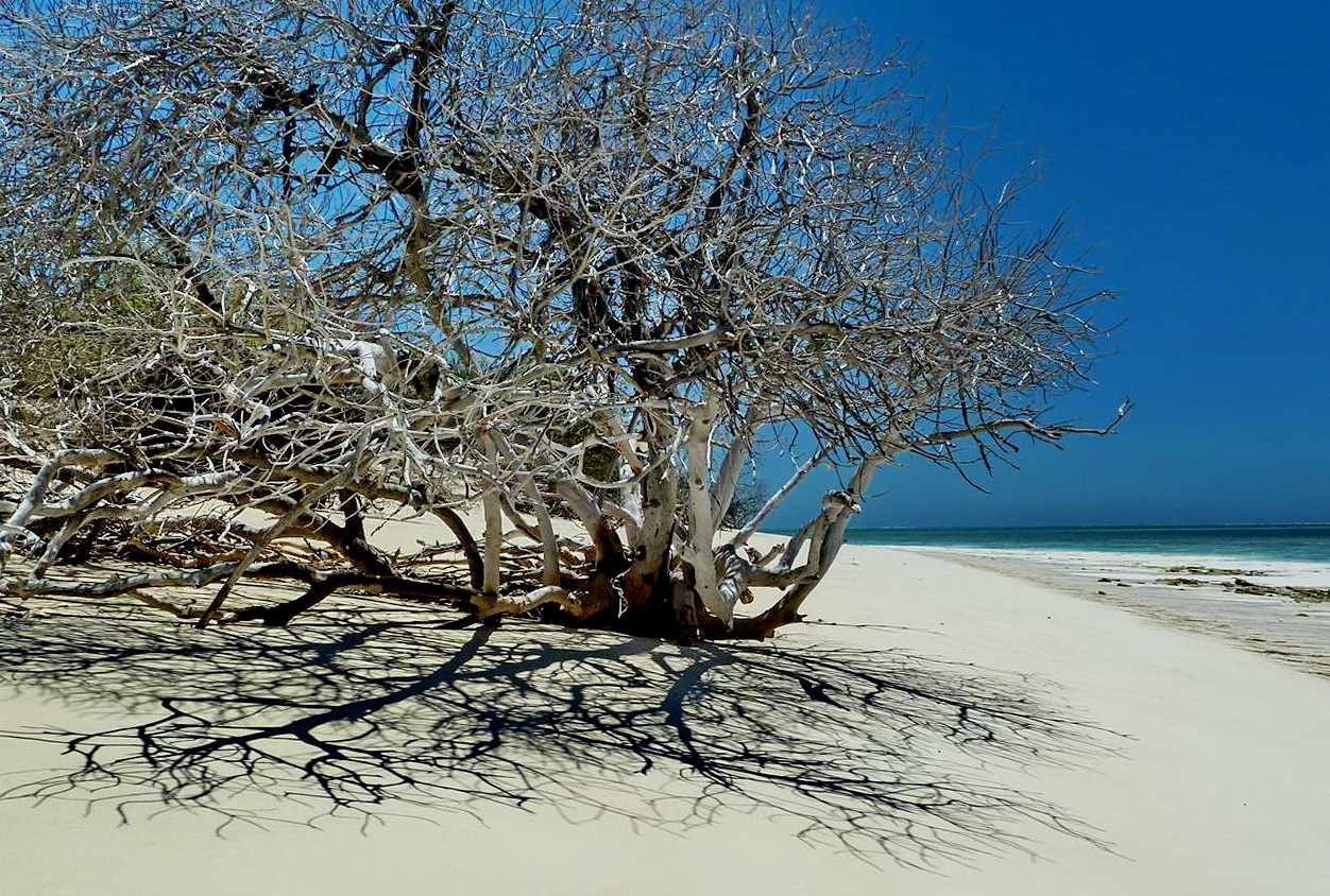 [Campagne] Iles éparses du canal du Mozambique - Page 13 235443P1060557