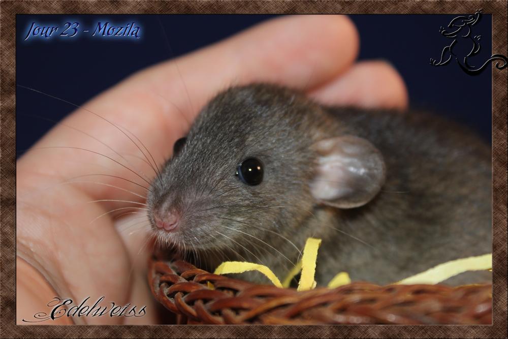 (06) Recherche rat -  Trouver!! :) 236809J23Mozilla5