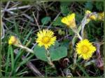 Partie Guérisseur : Les plantes de la Forêt 241229pasdne