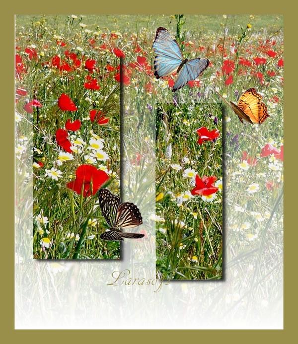 Partenaires Officiel La magie de Photofiltre avec autorisation d'échange de tutoriel. La magie de photofiltre  243634coquelicots2