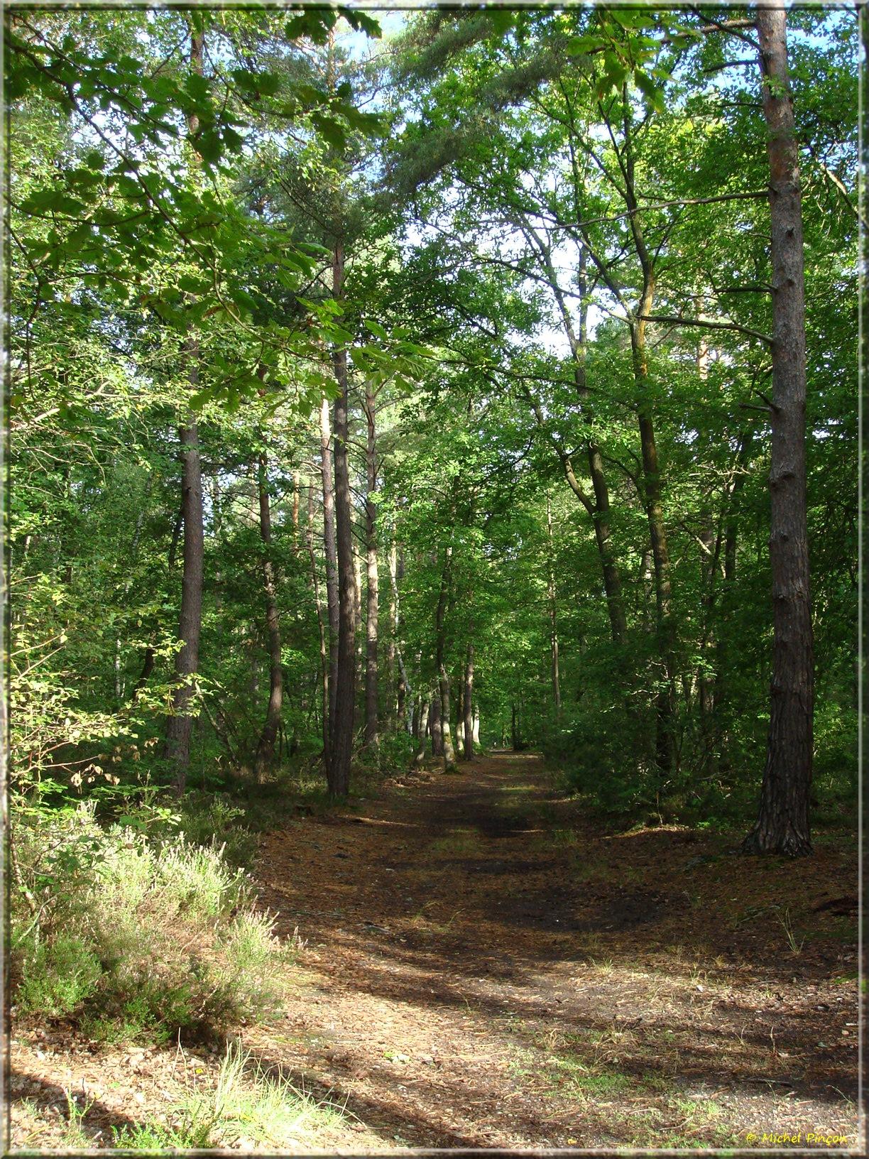[fil ouvert] la forêt dans tous ses états - Page 15 245240DSC013804