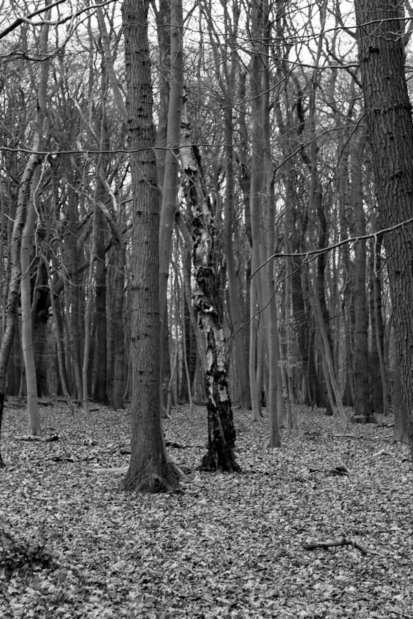 [fil ouvert] la forêt dans tous ses états - Page 17 245729014Copier