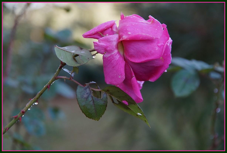 [Fil ouvert] Fleurs et plantes - Page 8 246203DSC07902