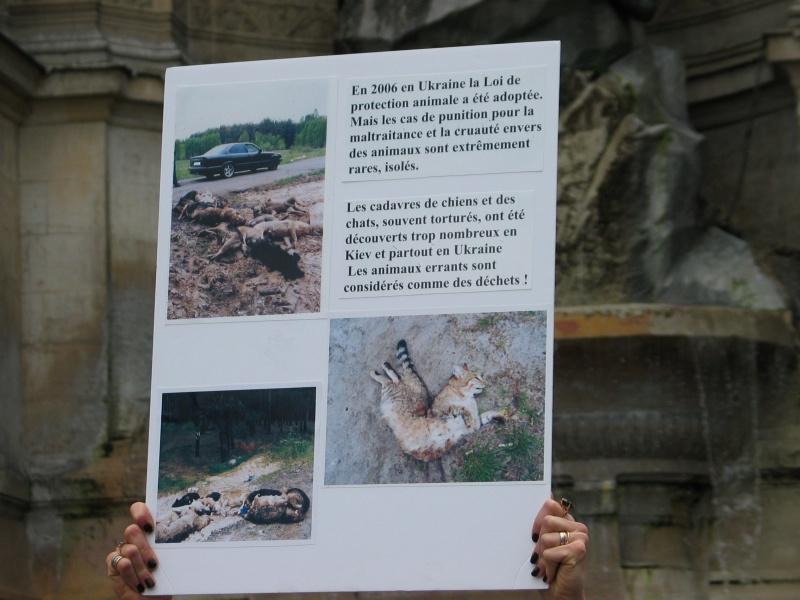 11 - Manifestation contre le massacre des animaux en Ukraine - 9 juin 2012 246901IMG9130