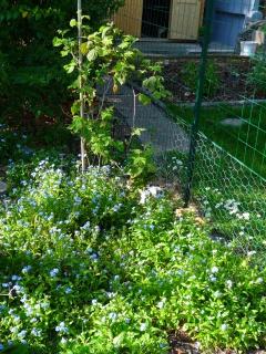 Nina, lapine bélier, née en aout 2011 - Page 8 249476P1160679