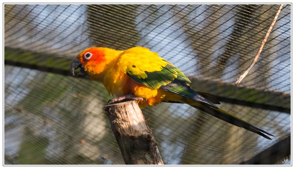Zoo de Beauval : les oiseaux 249549LR53P1140017