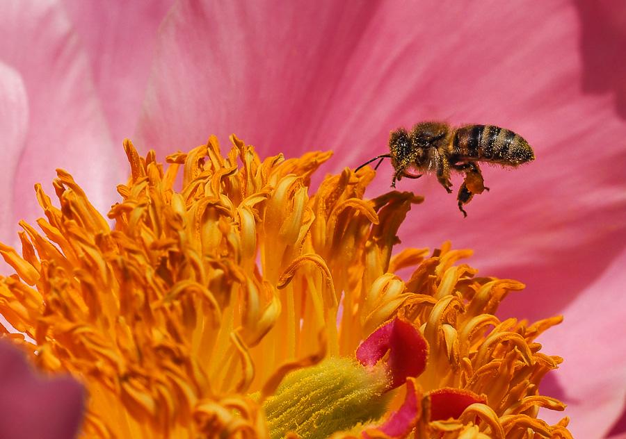 petites abeilles / test OM10 252600O040332