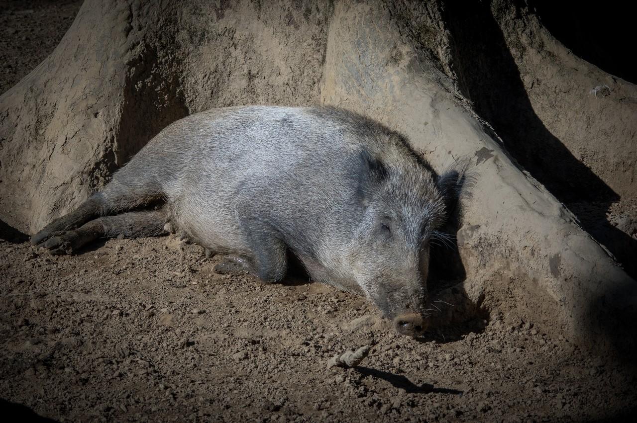 Zoos / Parcs animaliers - Page 2 253346IMGP1047