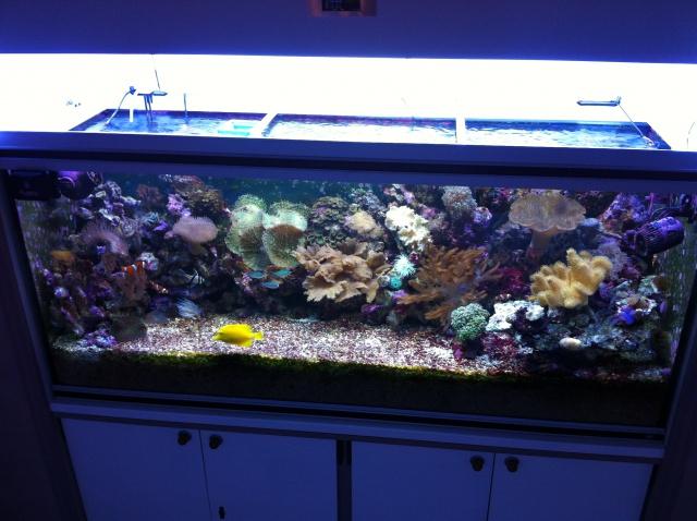 Projet Aqua 450 litres avec ARDUINO - Page 5 254846IMG4151