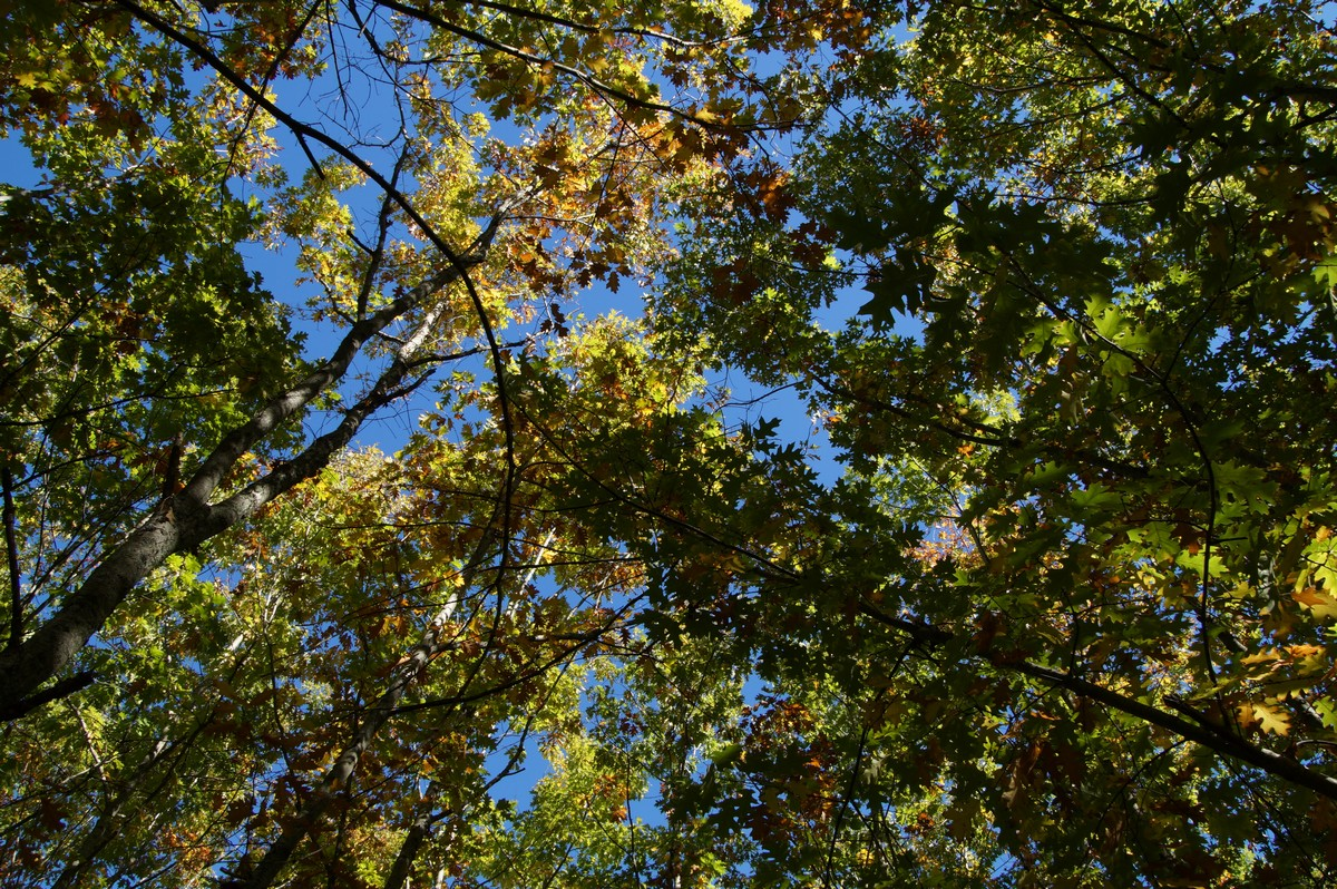 [fil ouvert] la forêt dans tous ses états - Page 15 256201DSC07755