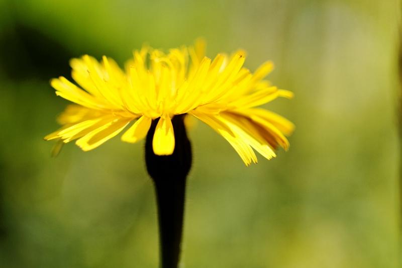 Flore et insectes de Vanoise 257636LelacBlanc055DxO800x600