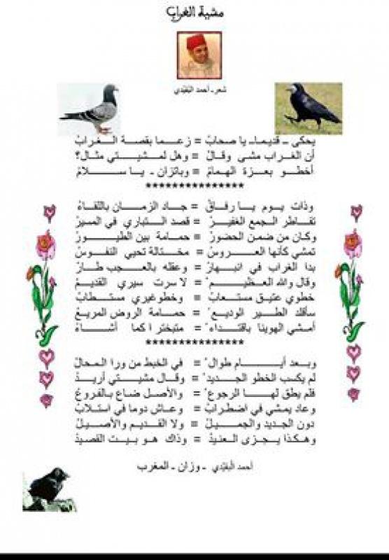 مشية الغراب / أحمد البقيدي 2603481576160216101583161016