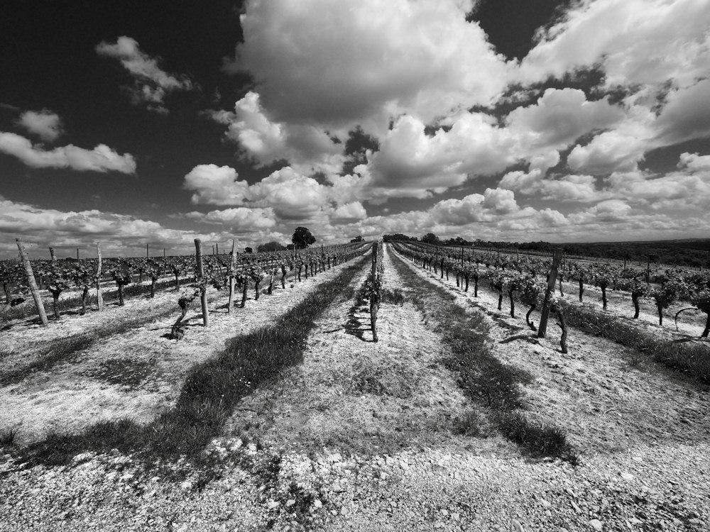 vignobles d'Armagnac. 261312barb03