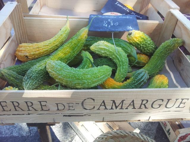 concombre amer, melon amer, momordica charantia ou margose 26473220160706111646