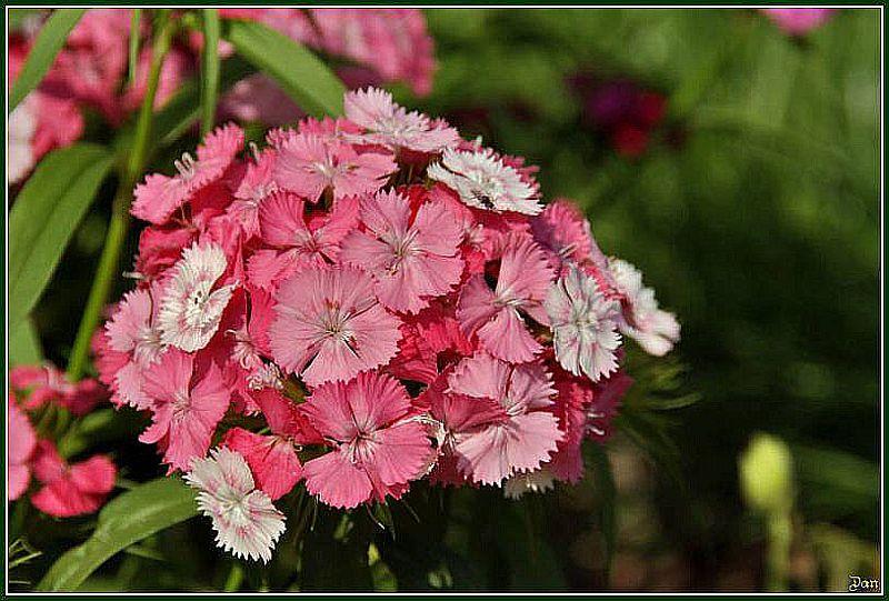 Les fleurs, plus belles les unes que les autres... 265165IGP2485