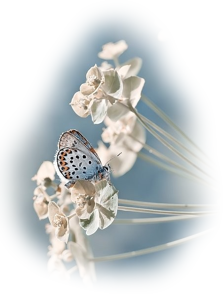 Tubes Papillon 267877Melgibson4e16