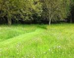 Clairière Naturelle