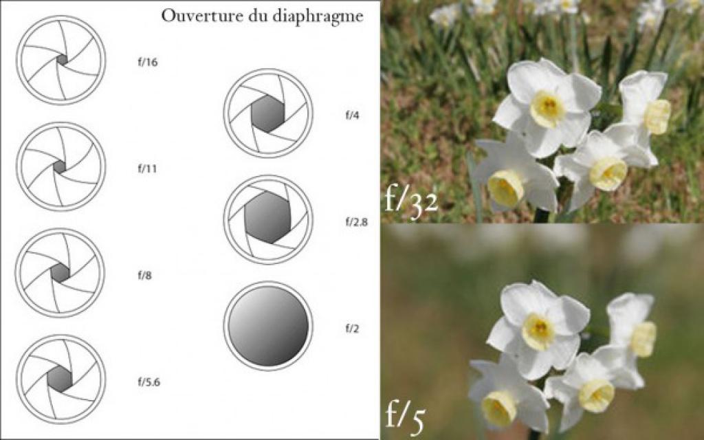 Diaphragme et profondeur de champ 273691Tuto2600x375