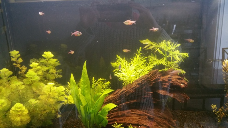 Mon premier aquarium (243L) 27629520160421161719