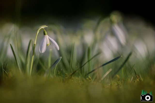 Je n'aime que toi petite fleur des champs... 276415IMG0045f28