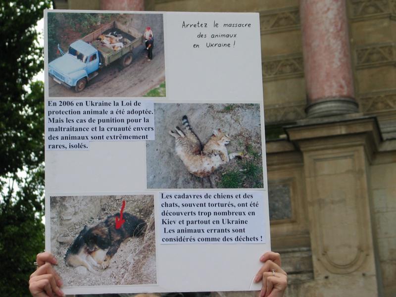 11 - Manifestation contre le massacre des animaux en Ukraine - 9 juin 2012 279988IMG9213