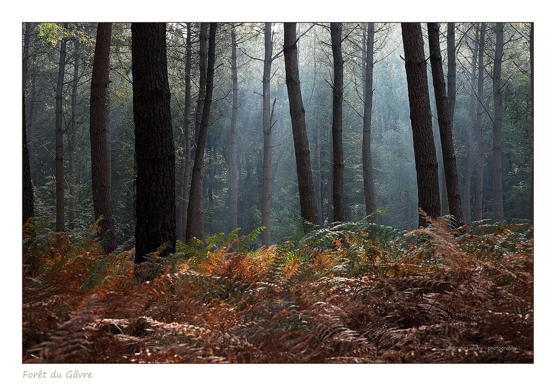 [fil ouvert] la forêt dans tous ses états - Page 2 282910DSCF8860copie