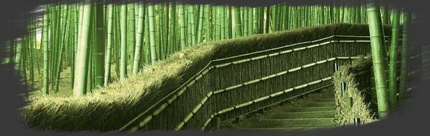 La Forêt des Bambous