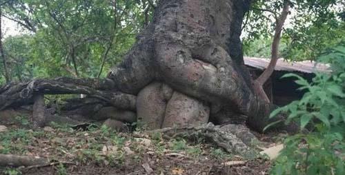 Comment se reproduisent les arbres? (classé X) 284056ATT00004