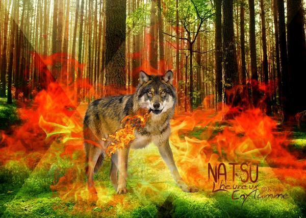 Natsu - Vagabond - Mâle - 3 ans et 9 mois 284524Natsutest600fini