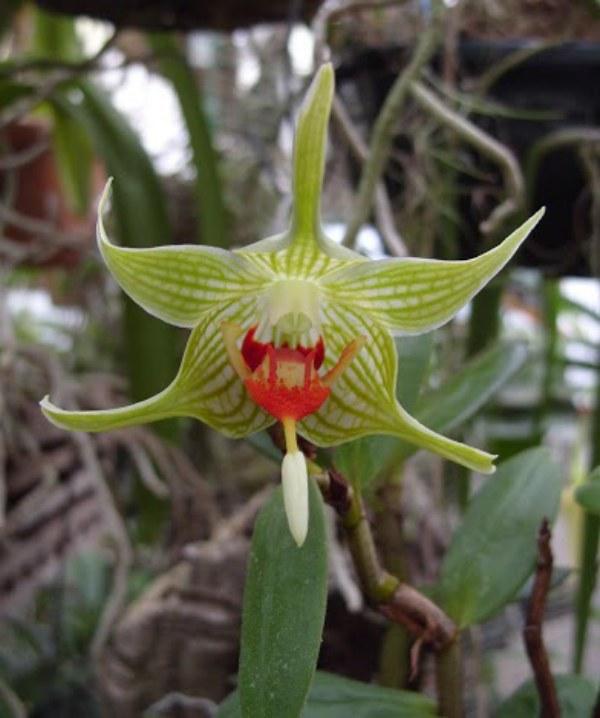 Discussion autour d'un genre : Les Dendrobium 287202S1052511800x600