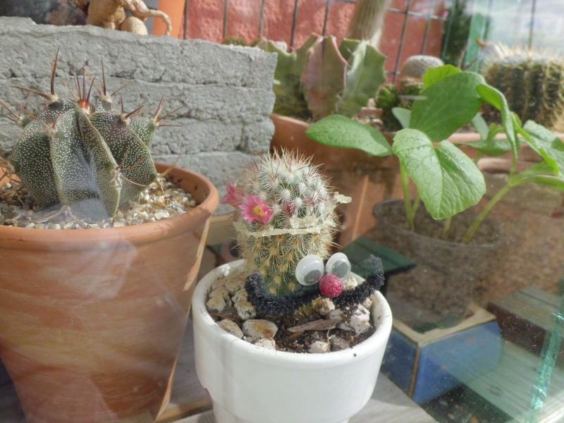 cactus de pô - Page 2 287936CIMG4522