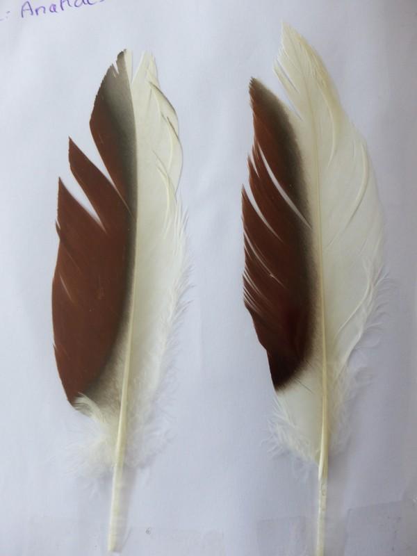 ma collection de plumes ! 288899P1470407