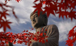 Upstairs Neighbor ~ Le voisin du dessus 289761autumnleavesaroundjapanesebuddha