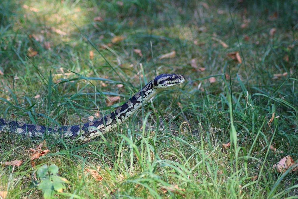 Journée internationale des serpents 292649t20152r