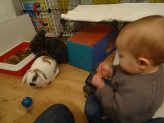 Nina, lapine bélier, née en aout 2011 - Page 9 297753DSC02182