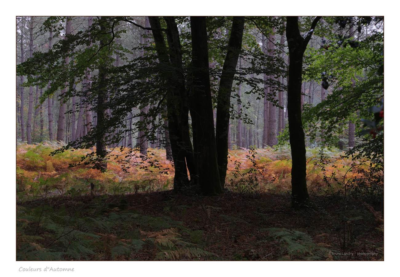 [fil ouvert] la forêt dans tous ses états - Page 2 298609DSCF8854copie