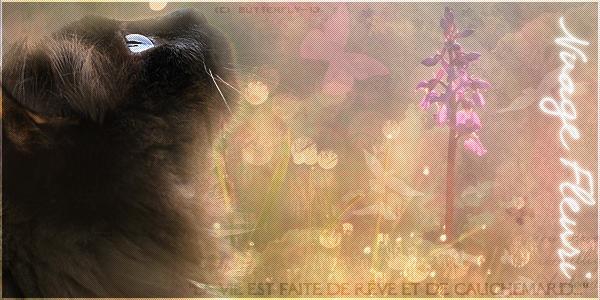 F.C.L. Atelier ~  [ Fleury [ABSENTE]  Chaty [PRÉSENTE] Luny [PRÉSENTE]] - Page 2 300934Sanstitre12