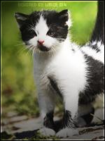Proposer un chaton ou une portée à l'adoption 301015Image2