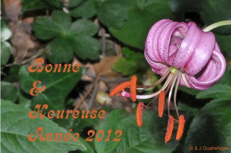 Joyeuses Fêtes de Fin d'Année !!! 301885DSC0936ba2012BA