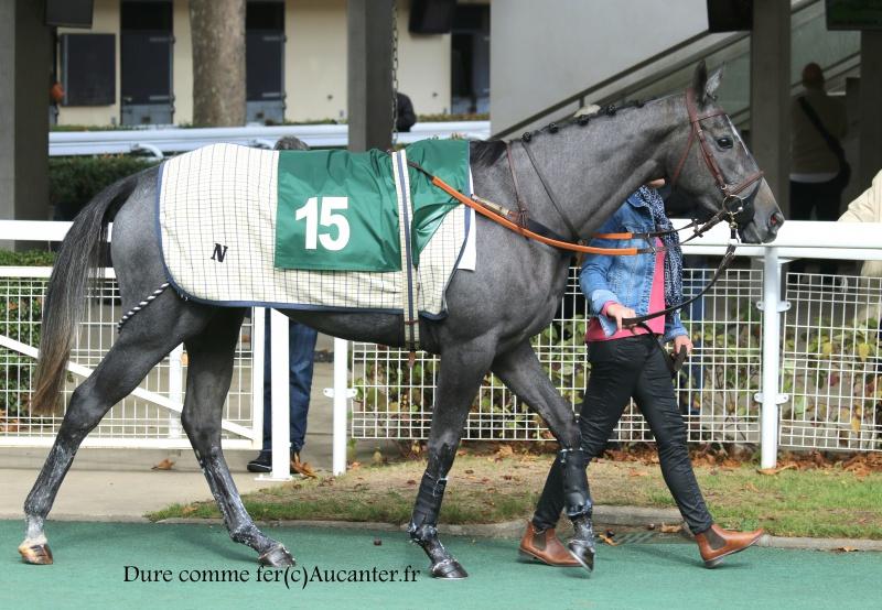 Photos Auteuil 15-10-2016 3048585J6A8397
