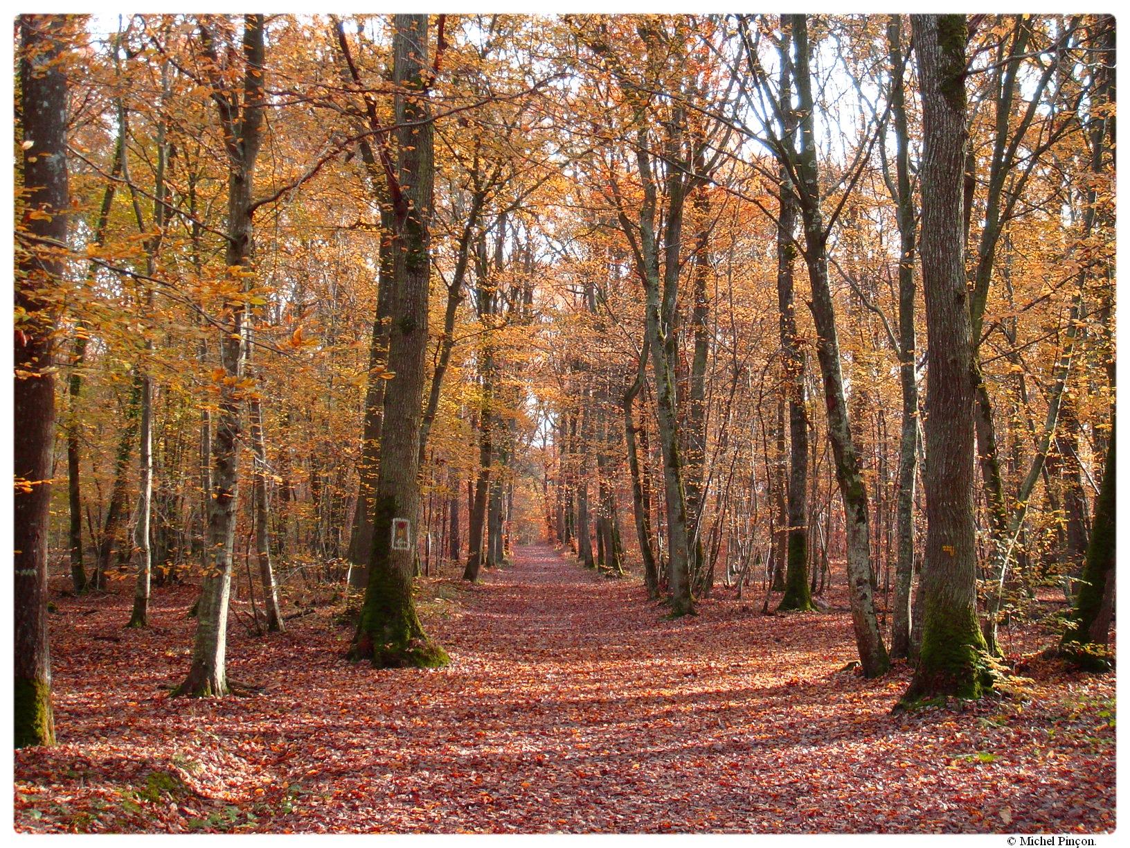 [fil ouvert] la forêt dans tous ses états - Page 17 306029DSC014367