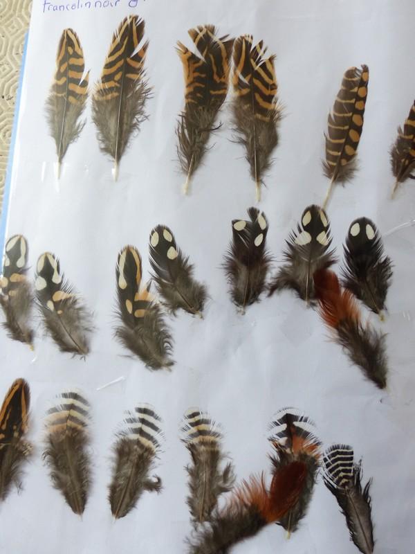 ma collection de plumes ! 306520P1470401